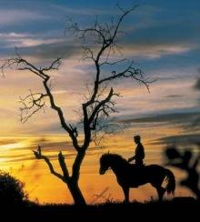 caballo y la noche