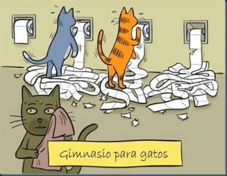 imagenes-graciosas-gimnasio-gatos